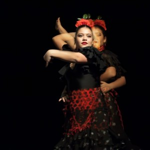Flamenco 2017-353